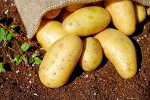 Kartoffeln (Rohstoff für Wodka)
